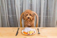 Έννοια του σκυλιού που έχει το εύγευστο ακατέργαστο κρεατάλευρο στον πίνακα στοκ εικόνες με δικαίωμα ελεύθερης χρήσης