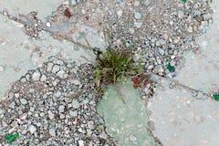 Έννοια δυσκολιών overcom Η χλόη αυξάνεται μέσω του πεζοδρομίου τσιμέντου Στοκ εικόνα με δικαίωμα ελεύθερης χρήσης