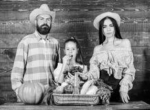 Έννοια φεστιβάλ συγκομιδών Οικογενειακοί αγρότες με το ξύλινο υπόβαθρο συγκομιδών Οι γονείς και η κόρη γιορτάζουν τις διακοπές συ στοκ φωτογραφίες