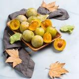 Έννοια φθινοπώρου πτώσης συγκομιδών Ώριμα juicy κίτρινα δαμάσκηνα Στοκ Φωτογραφίες