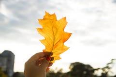 Έννοια φθινοπώρου - φύλλο πεσμένος από ένα δέντρο Στοκ φωτογραφίες με δικαίωμα ελεύθερης χρήσης