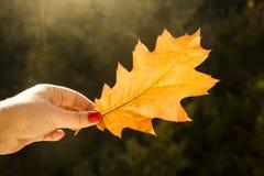 Έννοια φθινοπώρου - φύλλο πεσμένος από ένα δέντρο Στοκ Φωτογραφίες