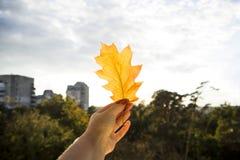Έννοια φθινοπώρου - φύλλο πεσμένος από ένα δέντρο Στοκ φωτογραφία με δικαίωμα ελεύθερης χρήσης