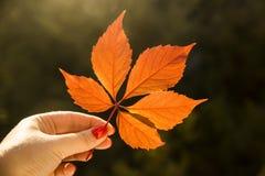 Έννοια φθινοπώρου - φύλλο πεσμένος από ένα δέντρο Στοκ Εικόνες