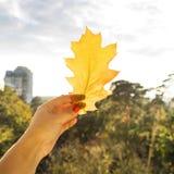 Έννοια φθινοπώρου - φύλλο πεσμένος από ένα δέντρο Στοκ Φωτογραφία