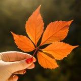 Έννοια φθινοπώρου - φύλλο πεσμένος από ένα δέντρο Στοκ εικόνα με δικαίωμα ελεύθερης χρήσης