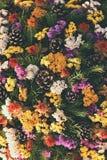 Έννοια φύσης φθινοπώρου όμορφες διακοσμήσεις φ&the Ζωηρόχρωμα λουλούδια φθινοπώρου στο νεκροταφείο - αποκριές Στοκ εικόνα με δικαίωμα ελεύθερης χρήσης