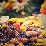 Έννοια φύσης φθινοπώρου όμορφες διακοσμήσεις φ&the Ζωηρόχρωμα λουλούδια φθινοπώρου στο νεκροταφείο - αποκριές Στοκ φωτογραφία με δικαίωμα ελεύθερης χρήσης