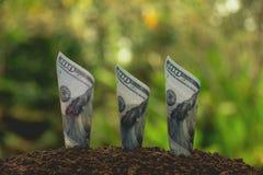 Έννοια χρημάτων αποταμίευσης με την ανάπτυξη τραπεζογραμματίων για την επιχείρηση Financi Στοκ εικόνες με δικαίωμα ελεύθερης χρήσης