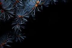 Έννοια Χριστουγέννων χειμερινών διακοπών, ασημένιο spruche στο μαύρο υπόβαθρο Στοκ εικόνες με δικαίωμα ελεύθερης χρήσης