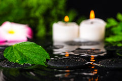 Έννοια SPA πράσινα hibiscus φύλλων, plumeria με τις πτώσεις και cand Στοκ φωτογραφία με δικαίωμα ελεύθερης χρήσης