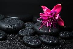 Έννοια SPA του ροζ με το κόκκινες φούξια λουλούδι και zen τις πέτρες Στοκ Εικόνα