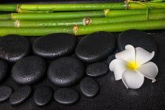Έννοια SPA των πετρών βασαλτών zen, άσπρο plumeria λουλουδιών Στοκ Εικόνες