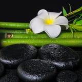 Έννοια SPA των πετρών βασαλτών zen, άσπρο plumeria λουλουδιών Στοκ Φωτογραφίες