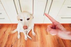 Ένοχο σκυλί και ο ιδιοκτήτης του στοκ εικόνα