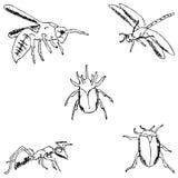 έντομα ένα σκίτσο με το χέρι λευκό δέντρων μολυβιών σχεδίων ανασκόπησης Στοκ Εικόνες