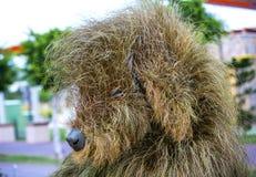 Έντομα και άνθρωποι ζώων αγαλμάτων που γίνονται από τις εγκαταστάσεις και τα χορτάρια Στοκ εικόνα με δικαίωμα ελεύθερης χρήσης