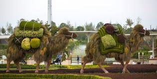 Έντομα και άνθρωποι ζώων αγαλμάτων που γίνονται από τις εγκαταστάσεις και τα χορτάρια Στοκ Εικόνες
