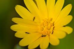 Έντομα σε ένα λουλούδι στοκ φωτογραφίες