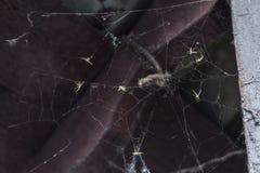Έντομα στον Ιστό Στοκ εικόνες με δικαίωμα ελεύθερης χρήσης