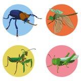 Έντομα στο διάνυσμα Στοκ Εικόνες