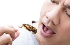 Έντομα τροφίμων: Άτομο που τρώει το έντομο γρύλων στο ξύλινο οβελίδιο Οι γρύλοι που τσιγαρίζονται πηγή τριζάτοι για τρώνε ως πρόχ στοκ φωτογραφία με δικαίωμα ελεύθερης χρήσης