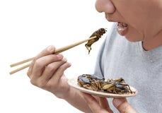 Έντομα τροφίμων: Άτομο που τρώει το έντομο γρύλων chopsticks Οι γρύλοι που τσιγαρίζονται πηγή τριζάτοι για τρώνε ως πρόχειρο φαγη στοκ εικόνες