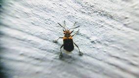 έντομα Στοκ φωτογραφία με δικαίωμα ελεύθερης χρήσης