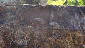 έντομα στοκ φωτογραφίες με δικαίωμα ελεύθερης χρήσης