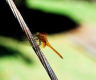 έντομα στοκ φωτογραφία