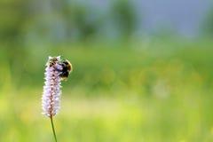 Έντομα. στοκ εικόνα