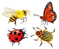 έντομα Στοκ Φωτογραφίες