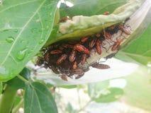 έντομα RAD σε ένα φύλλο Στοκ φωτογραφία με δικαίωμα ελεύθερης χρήσης