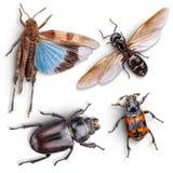 Έντομο άγριων ζώων Στοκ Εικόνες