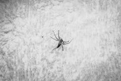 Έντομο αραχνών στην κινηματογράφηση σε πρώτο πλάνο υφάσματος Στοκ φωτογραφία με δικαίωμα ελεύθερης χρήσης