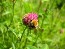 Έντομο και λουλούδι Στοκ εικόνα με δικαίωμα ελεύθερης χρήσης