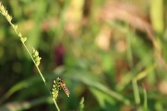Έντομο και χλόη στο collo στοκ εικόνα