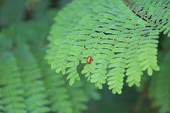 Έντομο που αγωνίζεται στο φύλλο για ζωντανό στοκ εικόνα με δικαίωμα ελεύθερης χρήσης