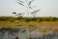 Έντομο που πετά γύρω από τη χλόη και την εικόνα λουλουδιών Στοκ Εικόνες