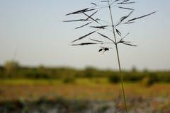 Έντομο που πετά γύρω από τη χλόη και την εικόνα λουλουδιών Στοκ εικόνες με δικαίωμα ελεύθερης χρήσης