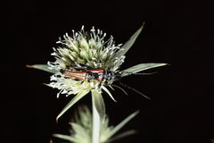 Έντομο που σκαρφαλώνει σε εγκαταστάσεις Στοκ Φωτογραφία