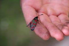 Έντομο σε ετοιμότητα στοκ φωτογραφίες