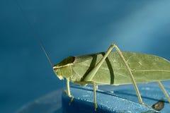 Έντομο σε μια μπλε επιφάνεια Στοκ εικόνα με δικαίωμα ελεύθερης χρήσης
