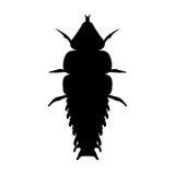 Έντομο σε πιό magnifier Κάνθαρος Duliticola Platerodrilus τριλοβιτών Σκίτσο του κανθάρου τριλοβιτών Σχέδιο κανθάρων τριλοβιτών γι απεικόνιση αποθεμάτων