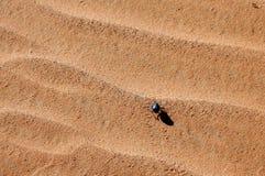 Έντομο στην άμμο στην έρημο Σαχάρα Στοκ Εικόνες