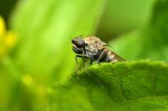 Έντομο στη Μαλαισία Στοκ Εικόνες