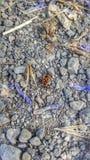 Έντομο στον τομέα Στοκ Εικόνες