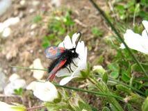 Έντομο στο λουλούδι στοκ εικόνα