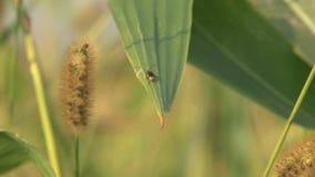 Έντομο στο φυτό απόθεμα βίντεο