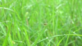 Έντομο στο φύλλο απόθεμα βίντεο